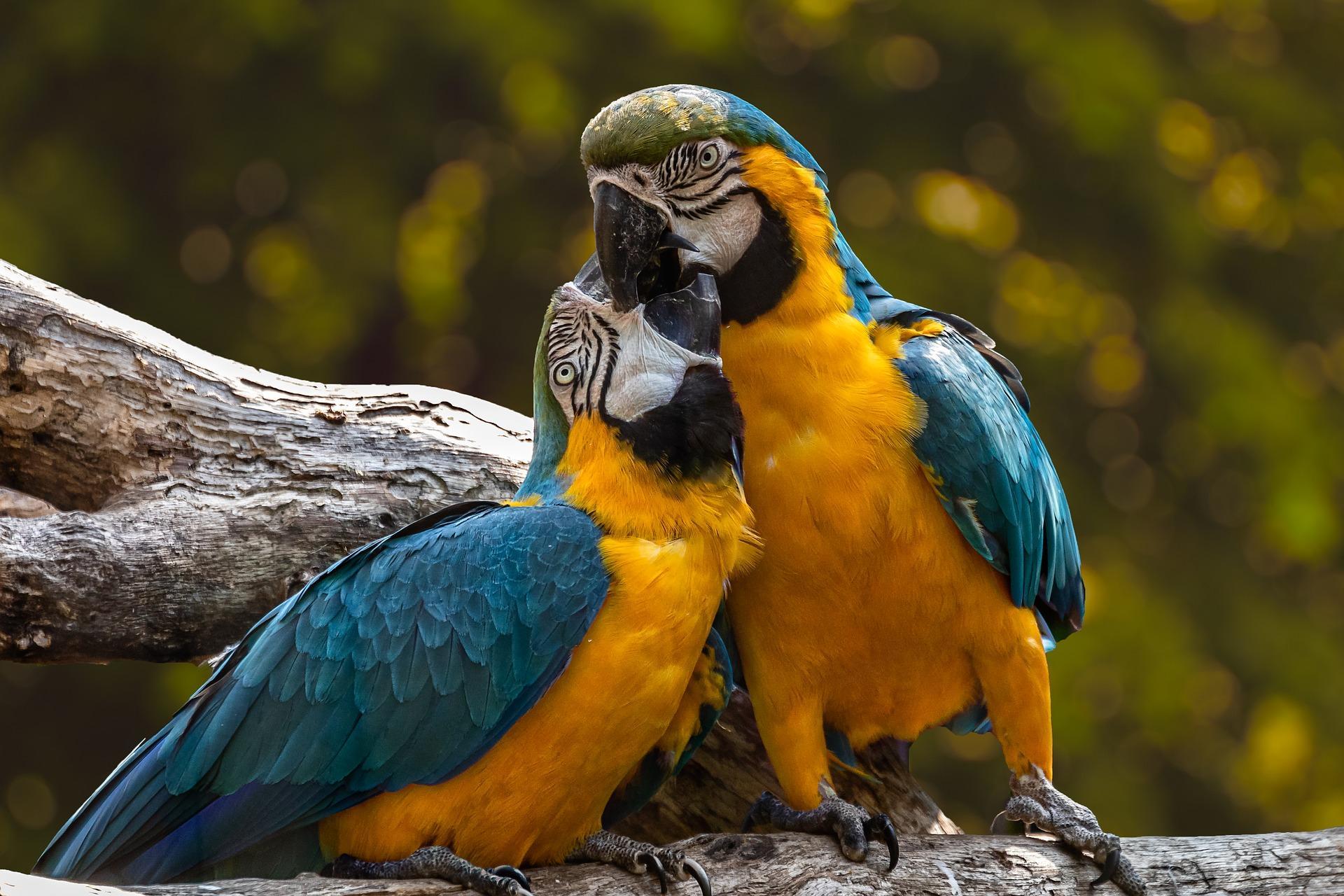 Parrots 3427188 1920