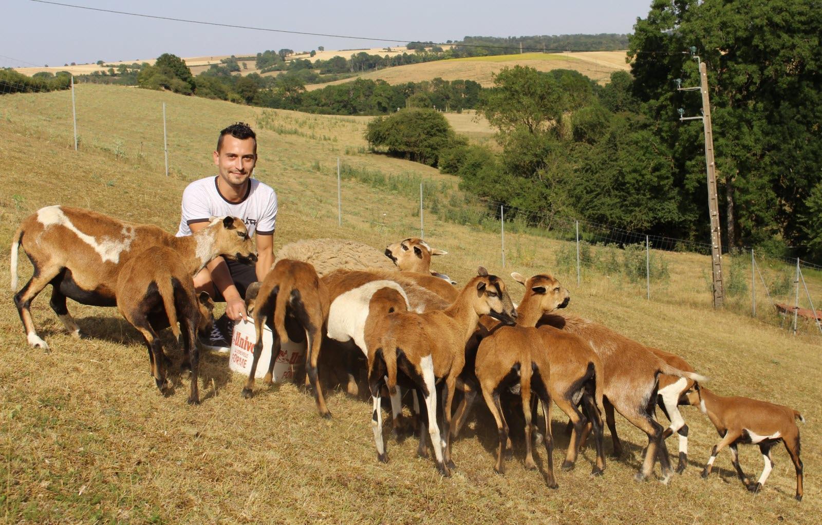 ferme de velbret - moutons du cameroun